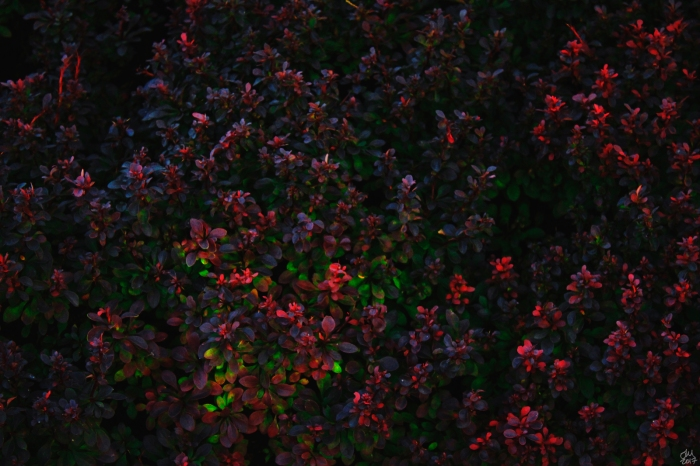 _MG_8465 (1)smsig